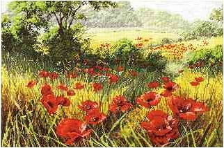 A Host of poppies