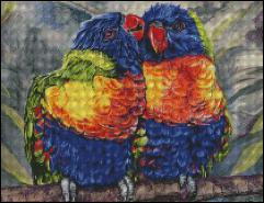 Multi Colored Parrots